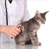 Ветеринарные клиники в Кытманово
